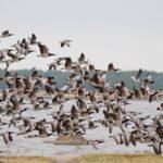Linnuvaatlejate paradiis Image